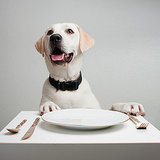 Ask a Vet: Is There an Ideal Diet for Dogs?