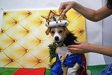 Dogs Dress Up as Superheroes for Comic-Con Weekend