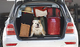'The Dog Lover's Guide to Travel' by Kelly E. Carter