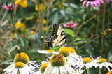 Keep Your Cool in the Garden — Here's What to Do in August (10 photos)
