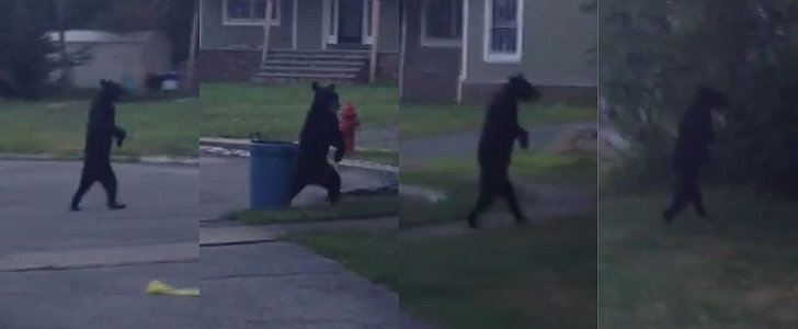 This Bear Walking Like a Human Is Either Cute or Terrifying