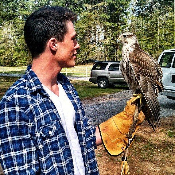 This Unsuspecting Hawk