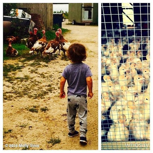 Brooks Stuber visited with turkeys, roosters, and chicks while in the Hamptons in New York. Source: Instagram user mollybsims