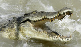 Australian Crocodile Kills Fisherman