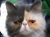 See Why This Sad Cat Makes Us So Happy