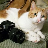 The 10 Best Kind of Cat Photos