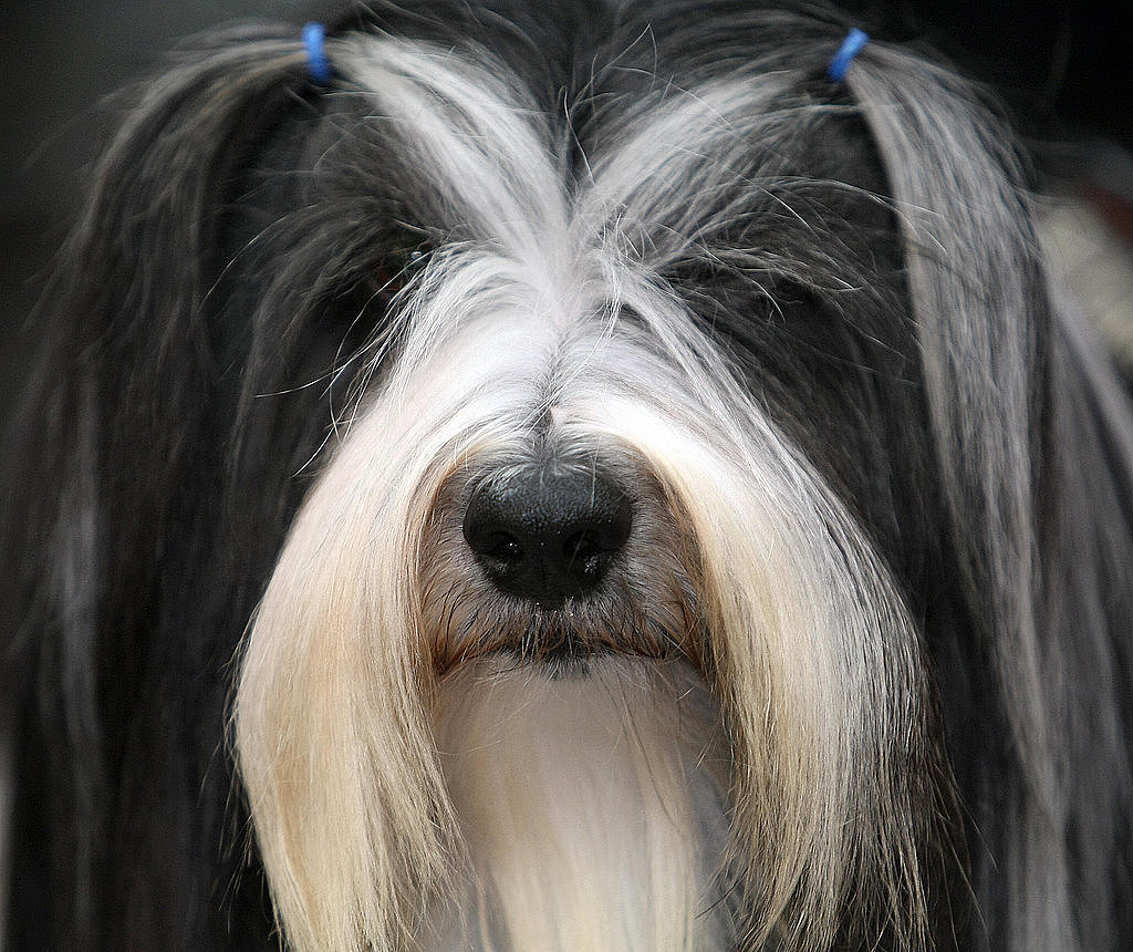 Doggy Styles: 15 Artfully Groomed Pup 'Dos