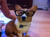 11 Corgis to Help You Through Your First Week of Classes