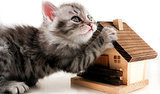 Russian Bank Offers Purrfect Loan Incentive - A Cat