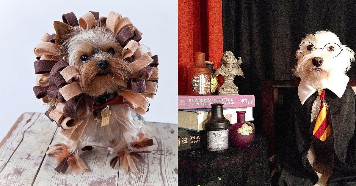 Cheap DIY Pet Costume Ideas   POPSUGAR Smart Living
