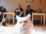 California's First Cat Café to Open in October