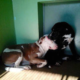 Two Dogs Found Friendship in a Shelter, Then Found a Forever Home Together