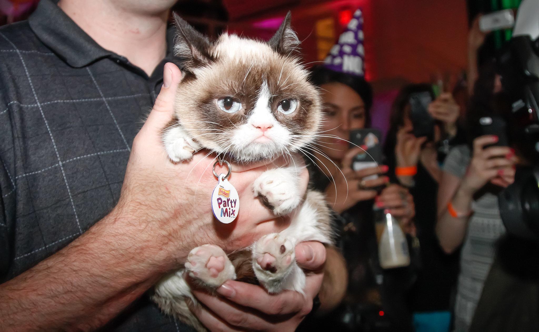 Share This Link  Cute Cat Meme Generator