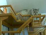 Man With Asperger Syndrome Builds Epic Cat Maze In His Home