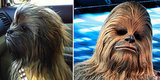 13 Dogs Who May Not Actually Be Dogs After All
