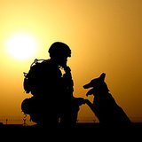Today We Honor Military Working Dogs