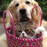 See Arashi the Smush-Face Cat Endure the Antics of a Dog