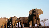 Elephant Appreciation Day: 10 Cool Facts About Elephants