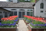 12 Classic Bulbs for Spring Blooms (21 photos)