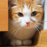 9 Tips for Socializing a Shy Cat