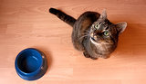 Protein Levels in Cat Foods May Be Too Low