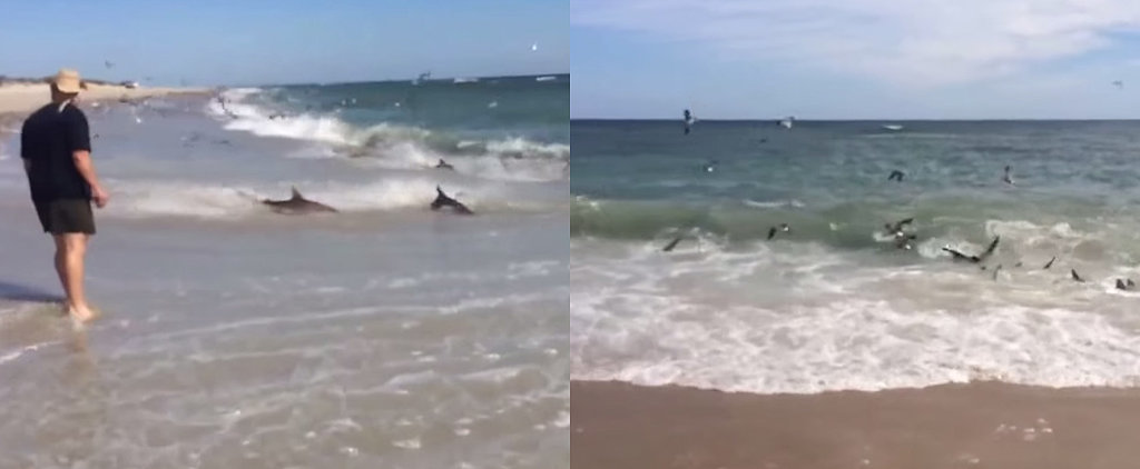 This Crazy Shark Feeding Frenzy Might Scare You Away From the Beach For Good