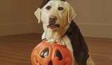 Halloween Dangers for Pets