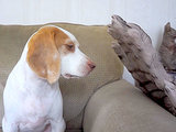 VIDEO: Internet Celeb Dog Courageously Stares Down Zombie Attack