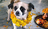 Nepal's Kukur Tihar Festival Is Diwali for Dogs