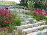 Plant Your Steps for a Great Garden Look (11 photos)