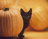 8 Absolutely Delightful Photos of Kittens and Their Pumpkins