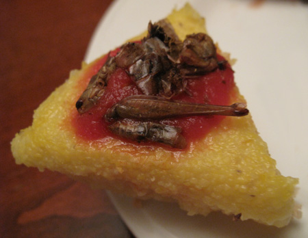 Grasshopper Polenta