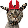 Is Your Kitty a Red Devil? 