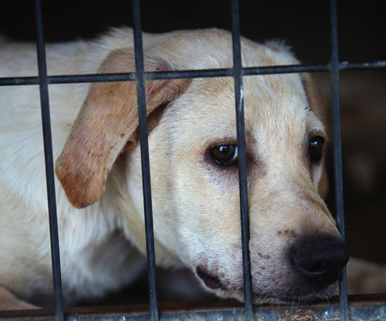 Myth: Dogs Who Have Been Mistreated Are Spoiled Forever.
