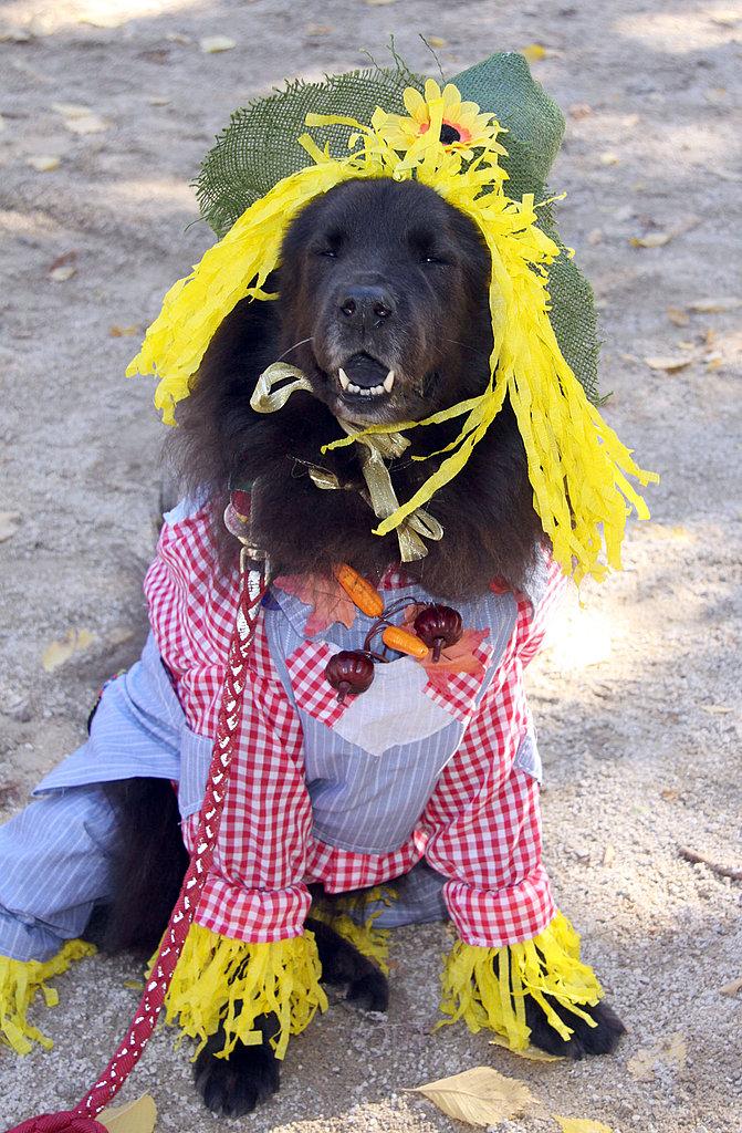 Stylin' Scarecrow