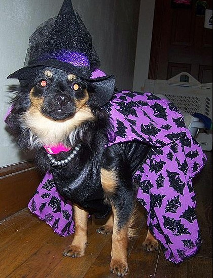Biscuit's a Witch For Couture