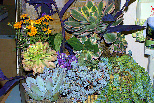 Look at how gorgeous it looks when it's overwhelmed with beautiful succulents and flowers. Source:  Flickr User Ed Bierman