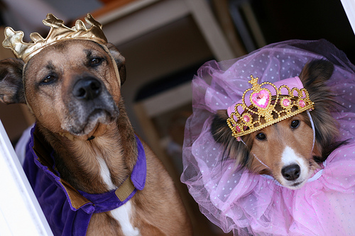Don't have any kids? Dress up your pooches instead and head out in the neighborhood for a trick-or-treating stroll. Source:  Flickr User mccun934
