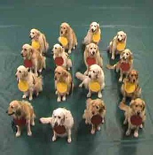 Can You Understand Atoms as Taught by 16 Golden Retrievers?