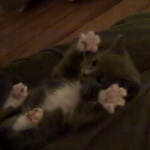 This Kitty Loves to Be Tickled — Just Don't Stop!