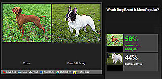 Play Our Newest Faceoff to Pick Which Dog Breed Is More Popular