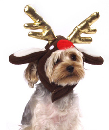 Run, Run, Rudolph: Reindeer-Themed Dog Gifts