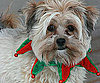 Pet Pic of the Day: Angus Shows Off His Holiday Spirit