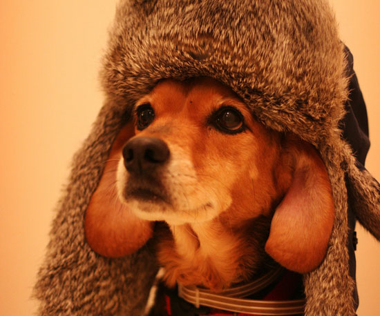 16 Hot Dogs in Hilarious Hats