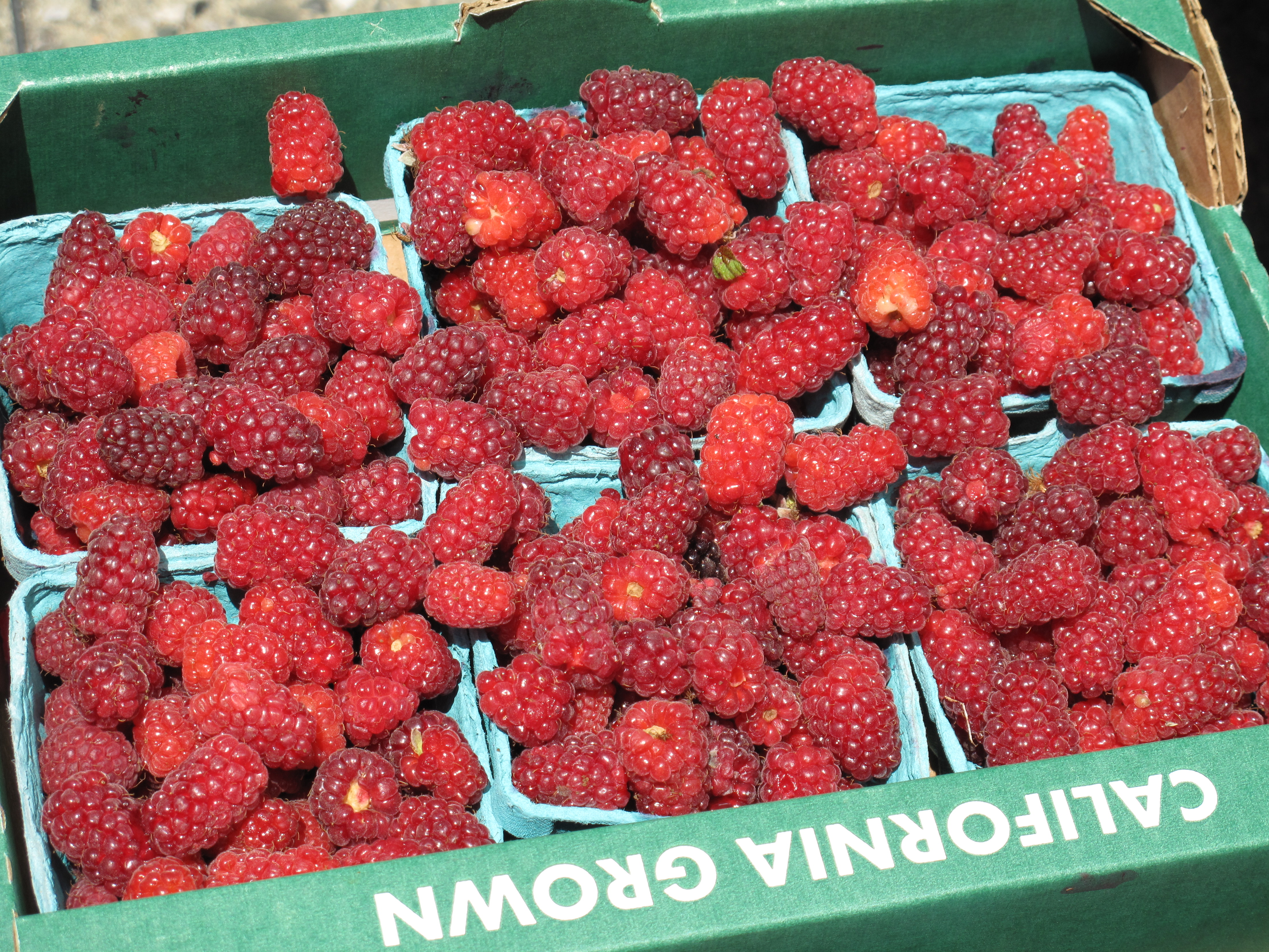 Fresh tayberries from Yerena Farms.