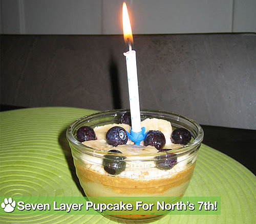 PetSugar&#039;s Original Seven Layer Pupcake Recipe