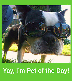 Pop Your Cute Pets . . . Into Our Pet of the Day Group!