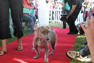 Photos of the 2009 Worlds Ugliest Dog Contest