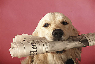 Do Tell: Do Your Pets Chew On Paper?
