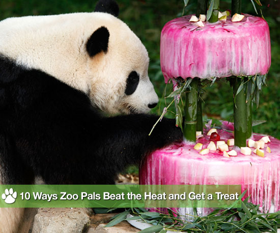 Ice For Zoo Animal Enrichment at Tai Shan's Fourth Birthday